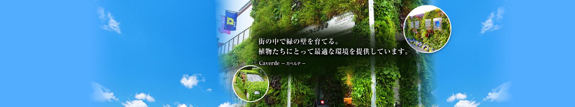 街の中で緑の壁を育てる。植物たちにとって最適な環境を提供しています。 Caverde-カベルデ-